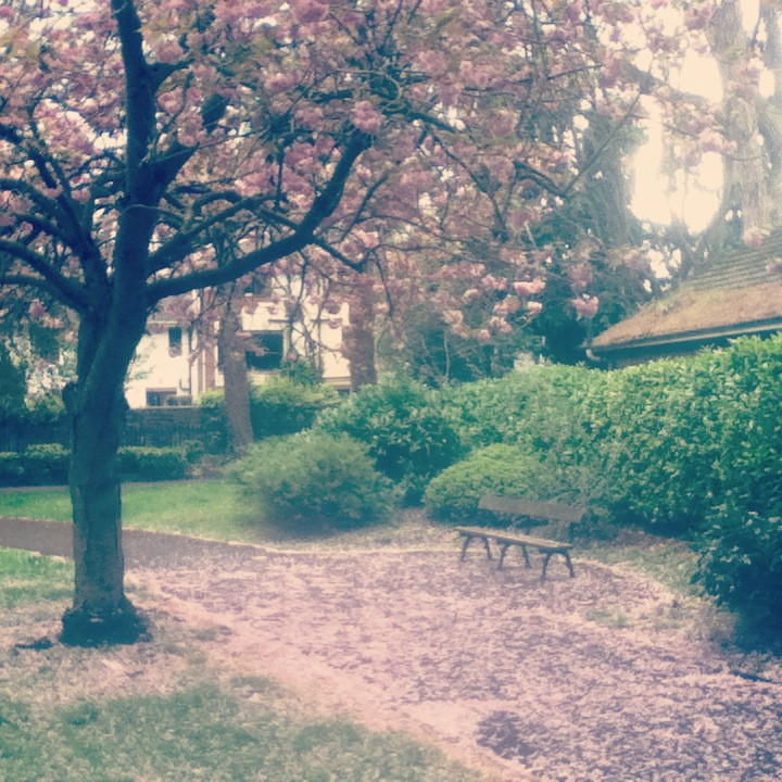 blossoms and benches